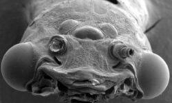 Как микробы, живущие коже могут рассказать о вашем возрасте?