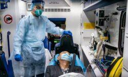 Могут ли панголины быть промежуточными хозяевами коронавируса?