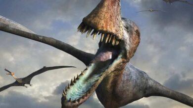 Фото Найден зуб динозавра, застрявший в теле кальмара. Почему это уникальная находка?