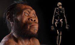 Обнаружены доказательства существования неизвестного вида древних людей