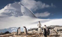 Пингвины издают звуки под водой и ученые не знают почему