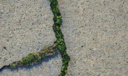 Создан «живой» бетон, способный «лечить» сам себя