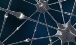 Живые и искусственные нейроны связали через интернет