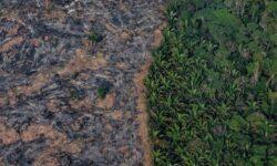 Через 50 лет леса Амазонки могут превратиться в пустыню