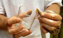 Как и для чего змеи вырабатывают яд?