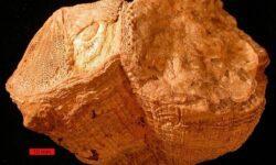 Насколько длинными были дни во времена динозавров?