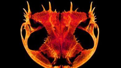 Фото Почему у лягушек такая странная форма черепа?