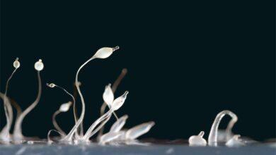 Фото Интроверсия: случайность в пределах погрешности или эволюционный механизм сохранения вида?