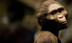 Произошел ли человек от обезьяны?