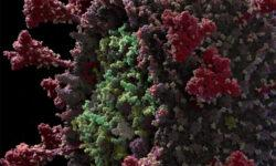 Коронавирус показан в виде научно достоверной 3D-модели в атомном разрешении