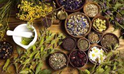Лечение травами – что нужно знать?