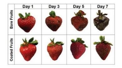 Фото Найден способ продлить срок годности фруктов на неделю