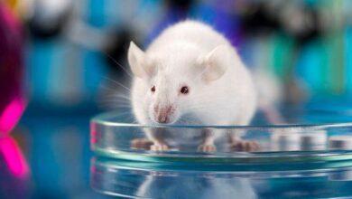 Фото Ученые создали еще более опасный вирус, чтобы победить COVID-19