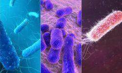 5 самых опасных бактерий