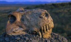 Из-за чего миллионы лет назад произошло массовое вымирание животных?