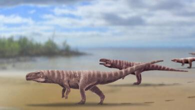 Фото Миллионы лет назад предки крокодилов ходили на двух ногах