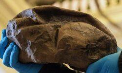 Найденный в Антарктиде загадочный камень оказался яйцом древнего чудовища