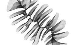 [Перевод] Визуализация генеративных алгоритмов: гифа, деревья, повторяющиеся и дифференциальные линии (на Python)