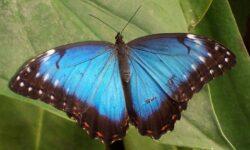 Почему крылья бабочек не ломаются под тяжелыми каплями дождя?