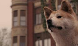 Собака — лучший друг человека, или просто притворяется?