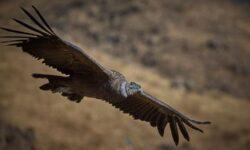 Эти птицы могут летать часами, ни разу не взмахнув крыльями