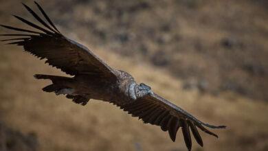 Фото Эти птицы могут летать часами, ни разу не взмахнув крыльями