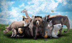 Как животные ведут себя перед землетрясением?