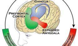 Нейробиология зависимости