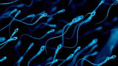 Фото Движение это жизнь: кинематика сперматозоидов