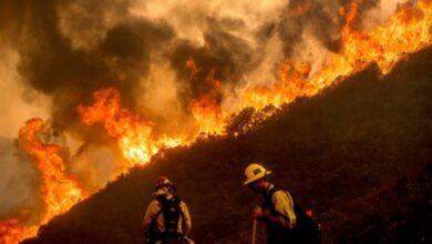 Фото Пожары в Калифорнии: из чего состоит дым и чем он опасен?