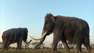 Фото Россия — месторождение слонов