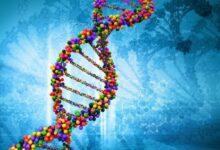 Фото [Из песочницы] Поиск родственников через тест ДНК. Часть 1 – Как ДНК может помочь узнать предков?