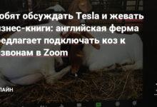 Фото Любят обсуждать Tesla и жевать бизнес-книги: английская ферма предлагает подключать коз к созвонам в Zoom