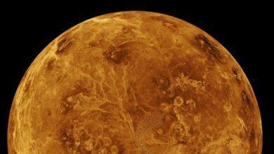 Фото На Венере есть газ, производимый микробами. Ученые нашли инопланетян?