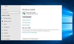 Новая сборка Windows 10 (20H2) с большим количеством исправлений стала доступна инсайдерам