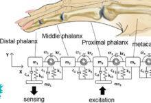 Фото Новый метод биометрии: биоакустическая подпись