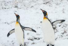 Фото [Перевод] Что нового в ядре Linux