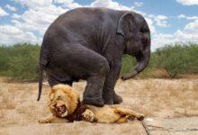 Фото Загадка природы: почему животные перестают бояться хищников?