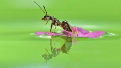 Фото Инженерия для муравьев: как не утонуть в сиропе