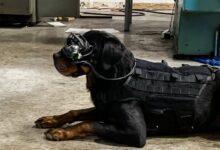 Фото Очки дополненной реальности для собак. Для чего они нужны?