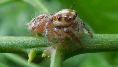 Фото ТОП самых маленьких пауков на планете